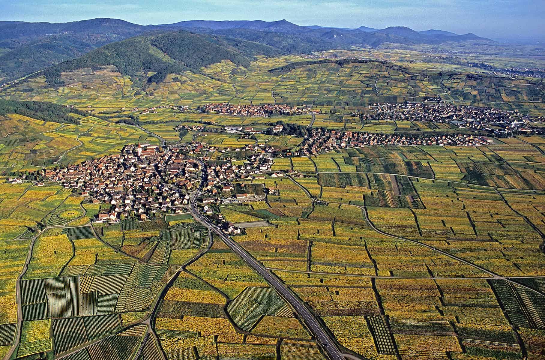 Vue aérienne du vignoble d'Alsace en été