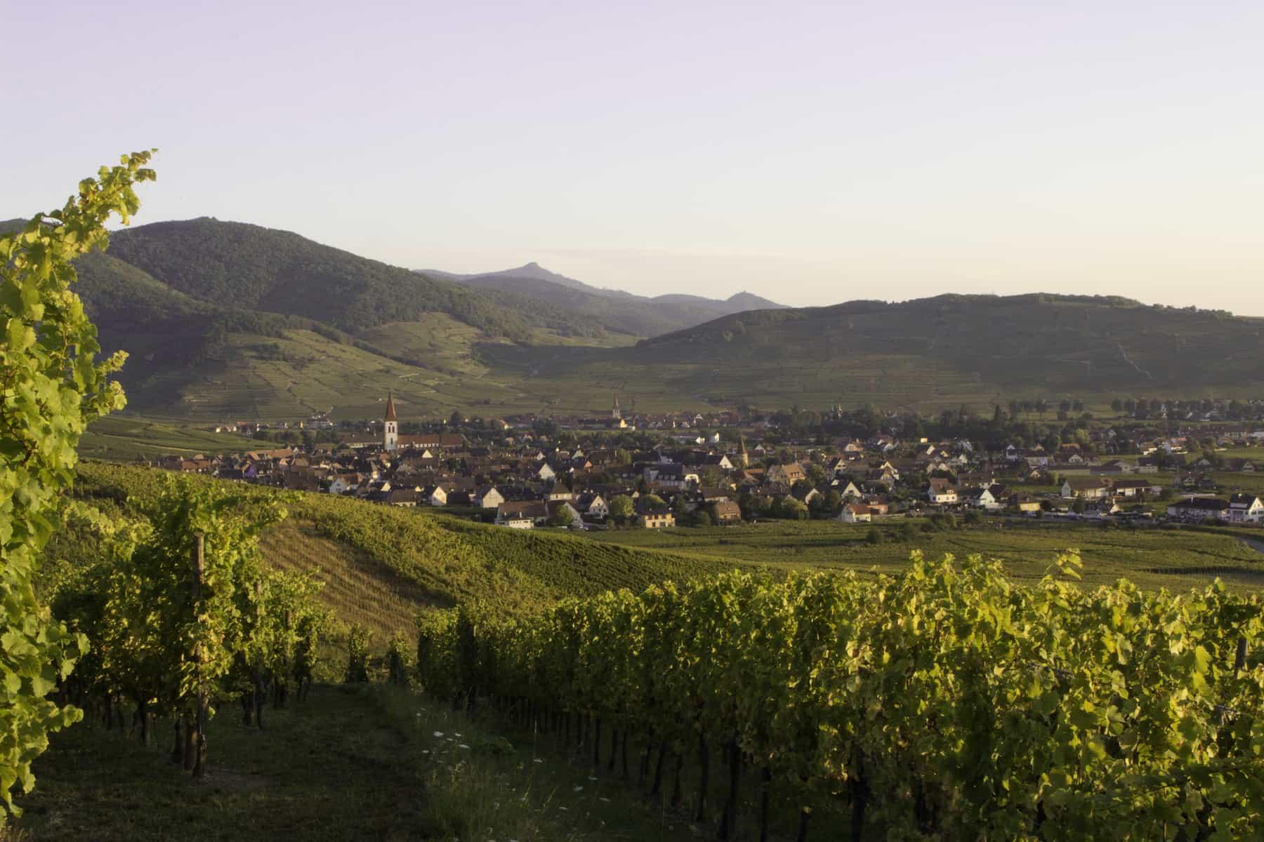 vue sur le village d'Ammerschwihr et les vignes en été